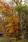 Autumn Leaves, Kielder Water